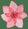 Flower timeline 1